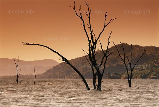 Zimbabwe, Dead trees in Lake Kariba at Sanyati West, Matusadona National Park.