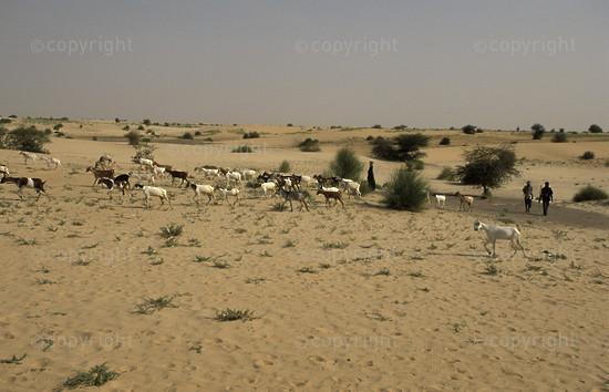 MA-TI-tuareg-001