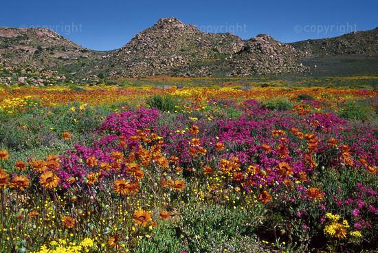 Goegap Nature Reserve, Namaqualand