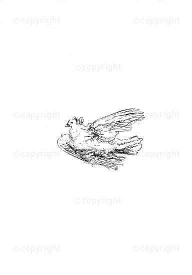 NFC_C1066: Sketch: Bird / logo
